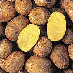 yukon-gold-potatoes